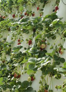 indoor-wall-garden